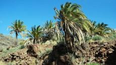 Ruta Naturalista: El Furel y La Saharita